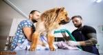 Profesyonel pet kuaför hizmeti